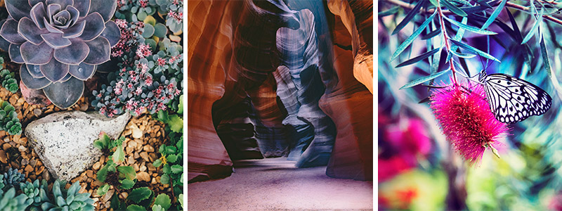 Trio of images featuring succulents, a canyon and a butterfly